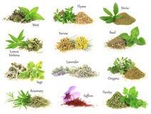 Ervas aromáticas frescas e secas foto de stock