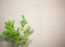Ervas aromáticas frescas no fundo de linho velho imagens de stock royalty free