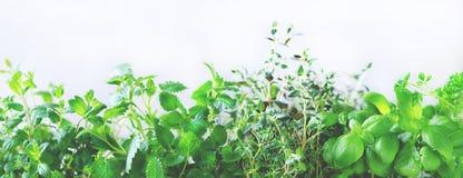 Ervas aromáticas frescas verdes - melissa, hortelã, tomilho, manjericão, salsa no fundo branco Quadro da colagem da bandeira das  foto de stock royalty free