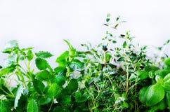 Ervas aromáticas frescas verdes - melissa, hortelã, tomilho, manjericão, salsa no fundo branco Quadro da colagem da bandeira das  fotos de stock royalty free