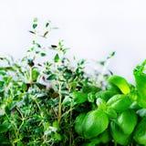 Ervas aromáticas frescas verdes - melissa, hortelã, tomilho, manjericão, salsa no fundo branco Quadro da colagem da bandeira das  fotos de stock