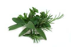 Ervas aromáticas para cozinhar Fotos de Stock