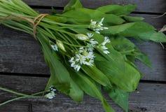 ervas caseiros frescas para saladas Foto de Stock