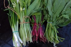 ervas caseiros frescas para saladas Imagens de Stock Royalty Free