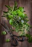 Ervas com as tesouras do jardim do vintage Imagens de Stock Royalty Free