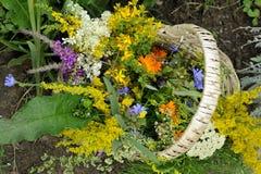 Ervas com cesta Foto de Stock Royalty Free