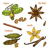 Ervas, condimentos e especiarias Baunilha e canela, caju e cardamomo, sementes e anis de estrela para o menu orgânico ilustração royalty free