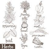 Ervas culinárias ajustadas Imagens de Stock