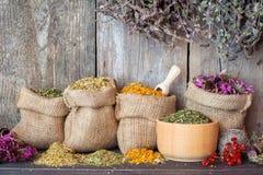 Ervas curas em sacos da juta e no almofariz na parede de madeira Fotografia de Stock Royalty Free