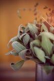 Ervas da cozinha Fotografia de Stock Royalty Free