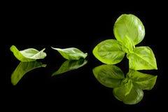 Ervas da manjericão. Fotografia de Stock