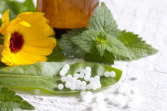 Ervas da medicina alternativa e comprimidos homeopaticamente Fotografia de Stock Royalty Free