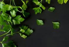 Ervas da salsa Fotos de Stock