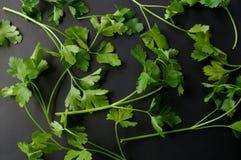 Ervas da salsa Fotografia de Stock
