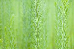 Ervas daninhas altas no jardim do wildflower Fotografia de Stock Royalty Free