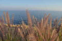 Ervas daninhas ao longo do litoral Imagens de Stock