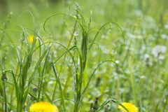 Ervas daninhas cobertos de vegetação em um prado imagem de stock