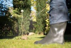 Ervas daninhas de pulverização no jardim fotografia de stock