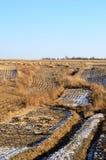 Ervas daninhas, florestas e campos de milho Imagens de Stock Royalty Free