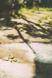 Ervas daninhas que crescem através da quebra no pavimento Imagem tonificada Imagem de Stock