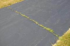 Ervas daninhas que crescem na rachadura da entrada de automóveis do asfalto imagens de stock