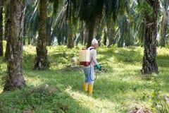 Ervas daninhas que envenenam em plantações da palma de óleo fotografia de stock royalty free