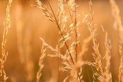 Ervas daninhas secas à vista do sol de ajuste Imagens de Stock Royalty Free