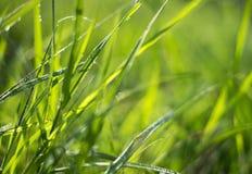 Ervas daninhas verdes Imagem de Stock