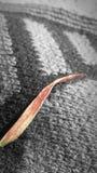 Ervas daninhas vermelhas Fotografia de Stock