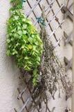 Ervas de secagem Imagem de Stock