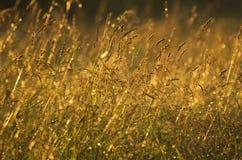 Ervas do prado após uma chuva Foto de Stock