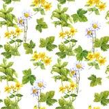 Ervas do prado, flores, grama Teste padrão sem emenda watercolor Foto de Stock Royalty Free
