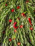 Ervas dos alecrins e pimentão vermelho Imagens de Stock Royalty Free