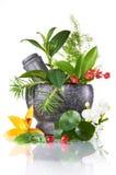 Ervas e almofariz Imagem de Stock Royalty Free
