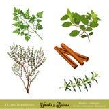 Ervas e especiarias ilustração stock