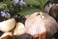 Ervas e especiarias Fotos de Stock