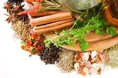 Ervas e especiarias imagem de stock