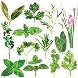 Ervas e especiarias ajustadas Imagens de Stock