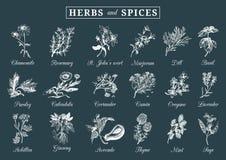 Ervas e especiarias ajustadas Entregue officinalis tirados, plantas medicinais, cosméticas Ilustrações botânicas para etiquetas c Imagens de Stock