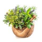 Ervas e especiarias aneto, alecrim, manjericão, hortelã, sábio, alfazema Ele Fotos de Stock Royalty Free