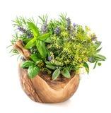 Ervas e especiarias aneto, alecrim, manjericão, hortelã, sábio, alfazema Ele Imagens de Stock