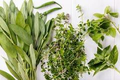 Ervas e especiarias aromáticas do jardim fotografia de stock royalty free