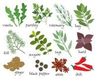 Ervas e especiarias do vetor Fotos de Stock