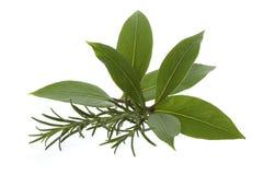 Ervas e especiarias frescas Imagem de Stock
