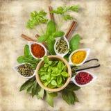 Ervas e especiarias frescas em um fundo do vintage Fotos de Stock Royalty Free