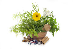 Ervas e especiarias no almofariz Imagem de Stock Royalty Free