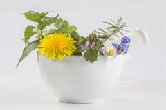 Ervas e especiarias no almofariz Imagens de Stock Royalty Free