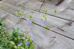 Ervas e flores Foto de Stock