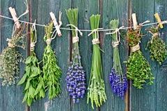 Ervas e flores que penduram para fora para secar imagem de stock royalty free