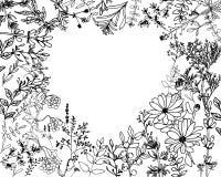Ervas e floweres selvagens Ajuste das flores da Botânica ilustração do vetor
